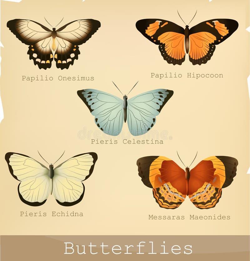 Download Butterflies stock vector. Illustration of massaras, graphic - 20528950