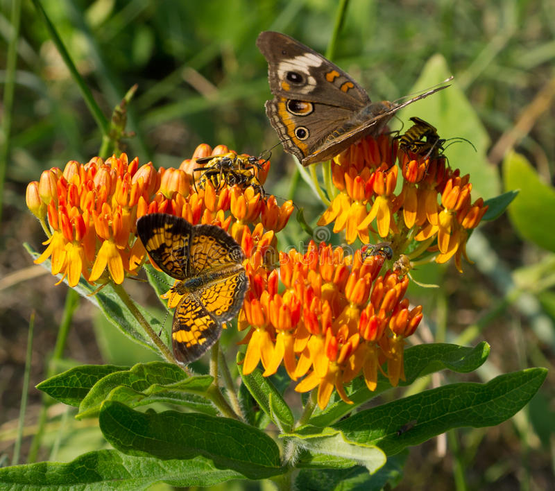 Download Butterflies Stock Photography - Image: 21043692