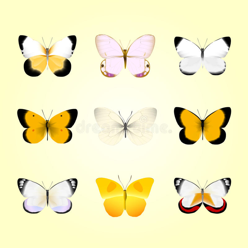Download Butterflies stock vector. Image of animal, tiger, avatar - 27310183