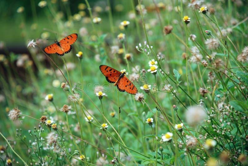 Download Butterflies stock photo. Image of macro, outside, garden - 3227748