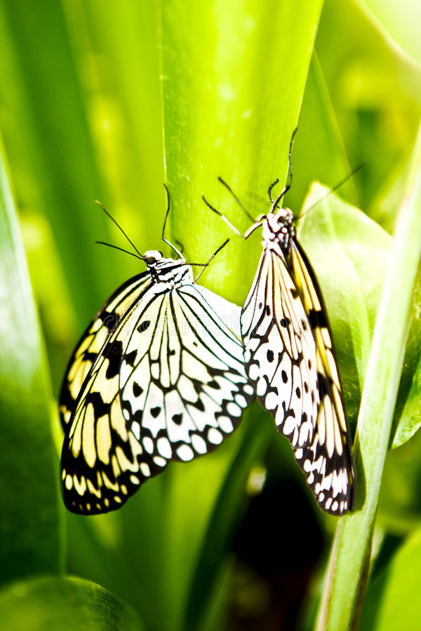 Download Butterflies Stock Images - Image: 6885234