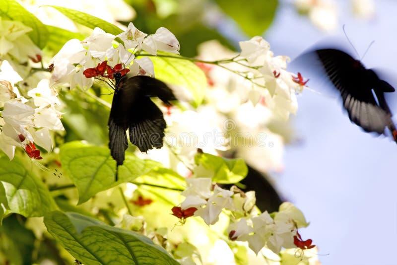 Butterflies in action