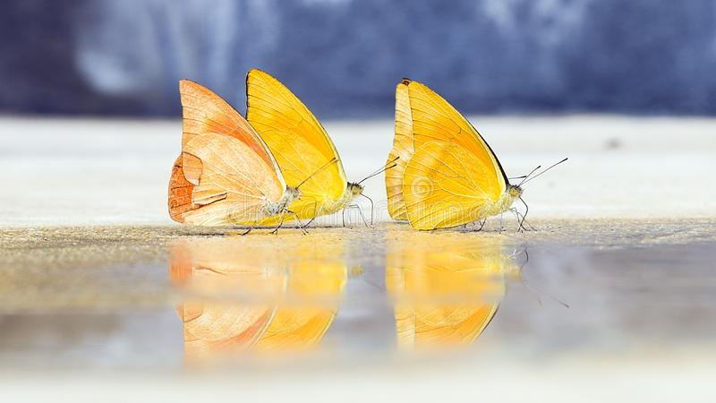 Butterflies appear early in the summer royalty free stock photo