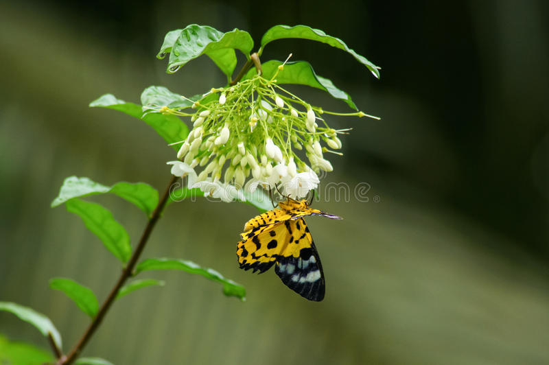 Butterflies are beautiful insects stock photo