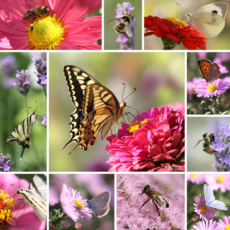 Butterflies And Bees Collage Royalty Free Stock Photos