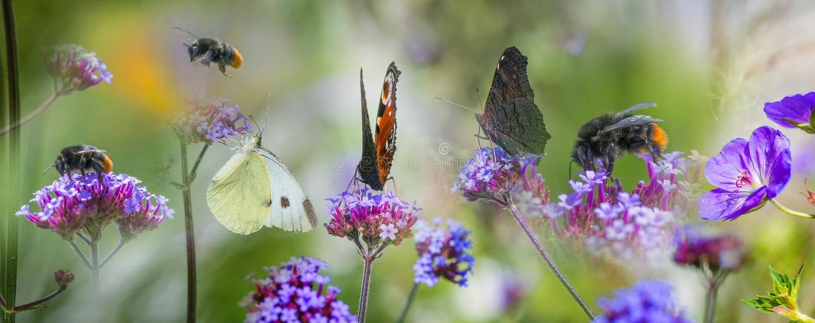 Butterflies and bumblebees on garden flowers. Summer view stock photography