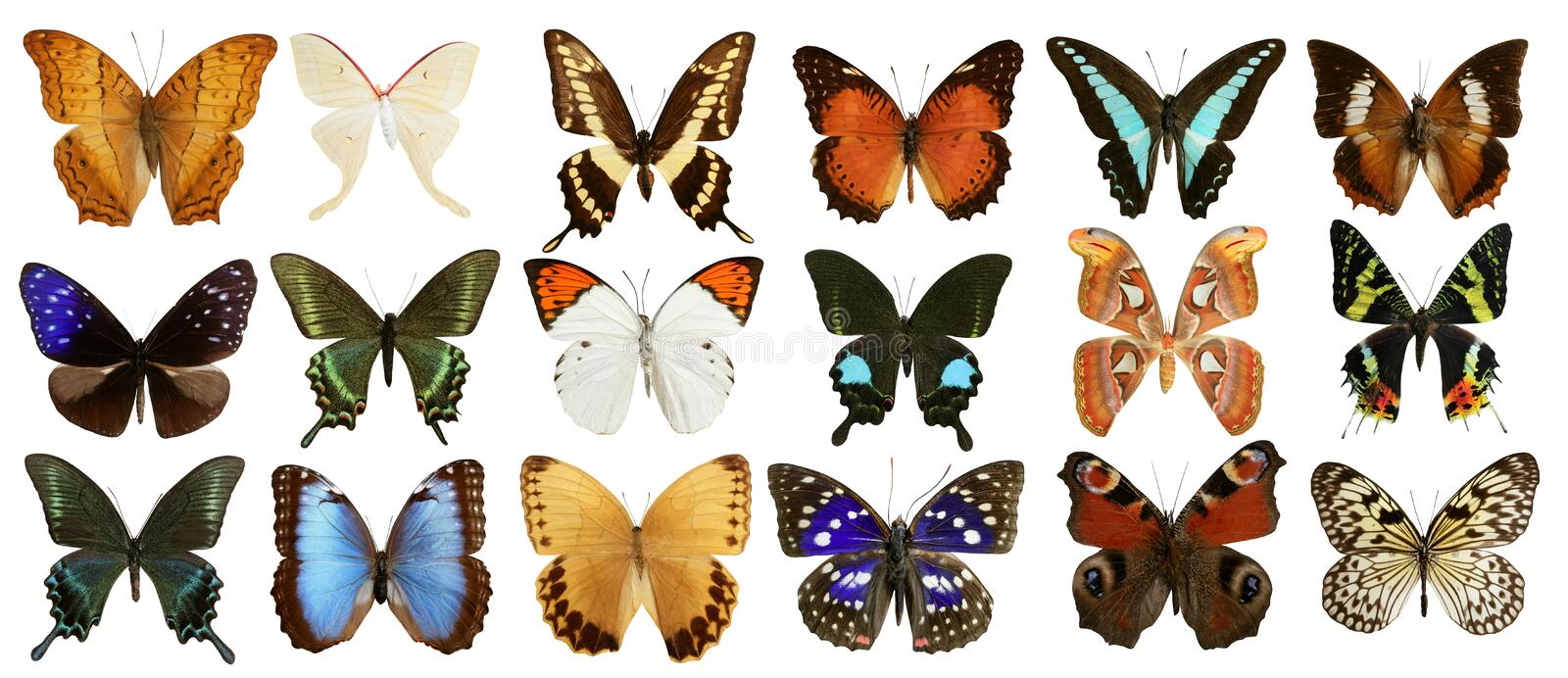 Butterflies collection colorful isolated on white vector illustration