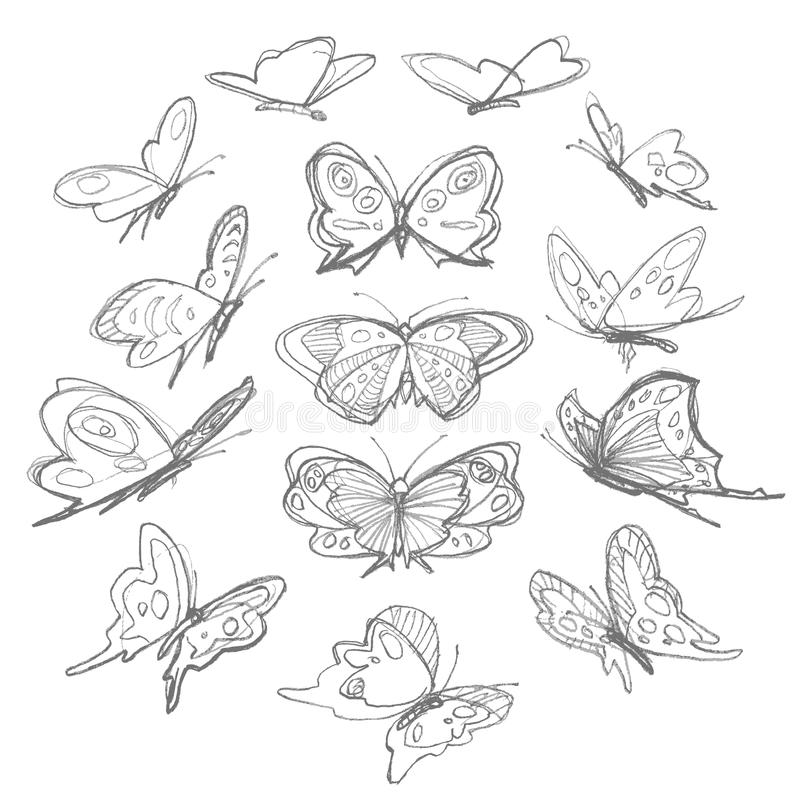 butterflies drawing stock vector illustration of