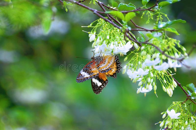 Butterflies are eating food from flowers. stock photography