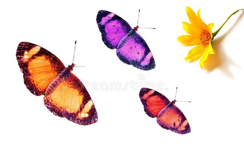 Butterflies and Flower. Three butterflies going for a flower stock photo