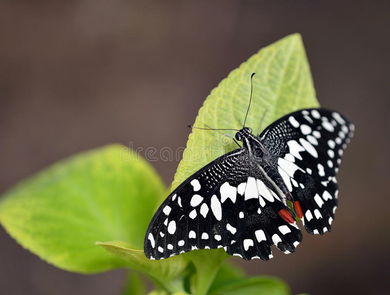 Download Butterflies And Flowers Stock Photo - Image: 26533590