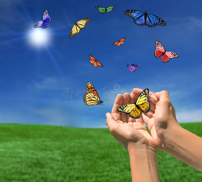 Butterflies Flying Outdoors Towards the Sun stock photography
