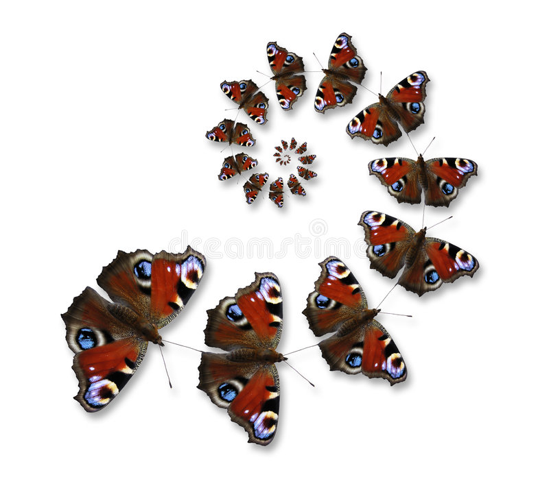 Butterflies flying in spiral. On the white background stock photography