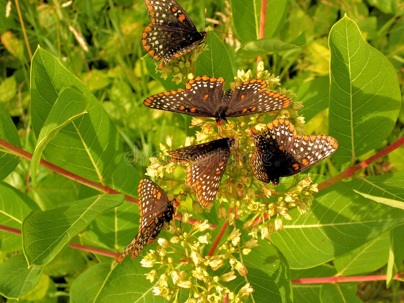 Butterflies gathered on summer flowers stock images