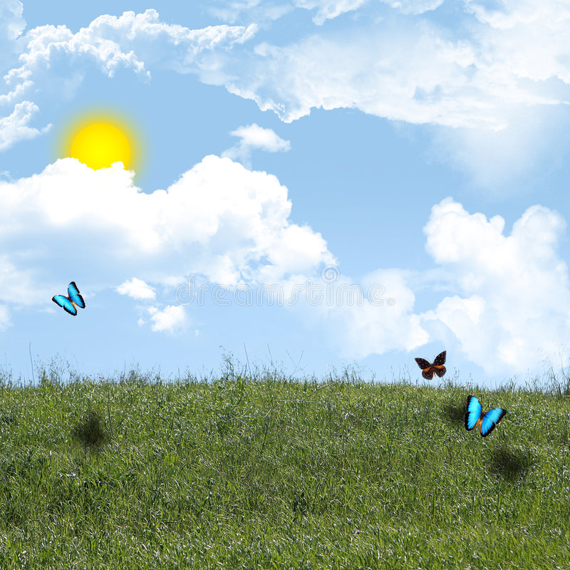 Butterflies on hill stock photography