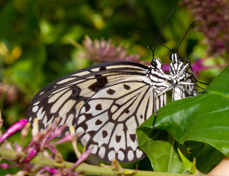 Download Butterflies Hug stock image. Image of tree, environment - 12070193