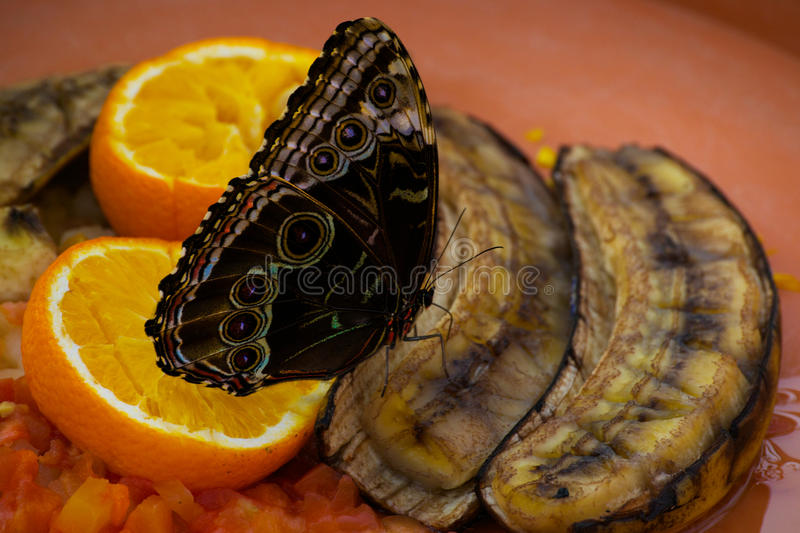 Butterflies and hurricanes royalty free stock photography