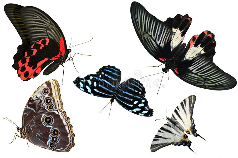 Butterflies are insects collection. Of isolated on white background stock images