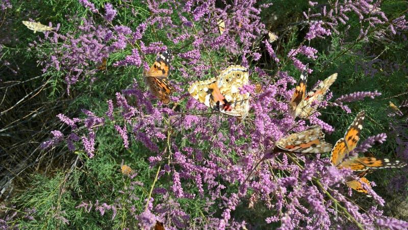 Butterflies in June stock image