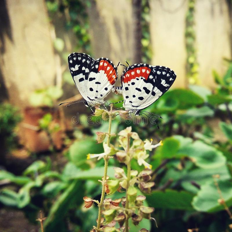 Butterflies love royalty free stock photography