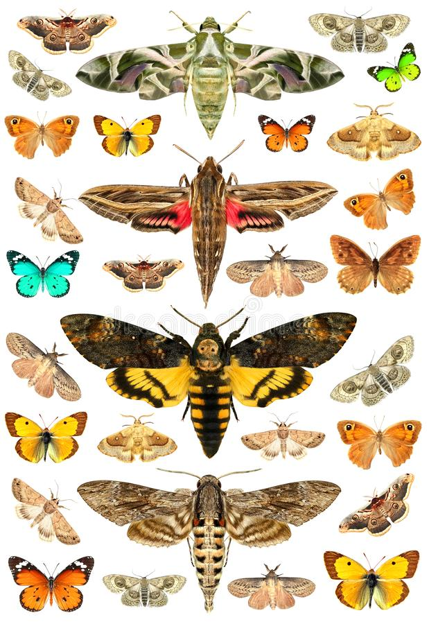 Butterflies and moths. Isolated on a white background royalty free stock images
