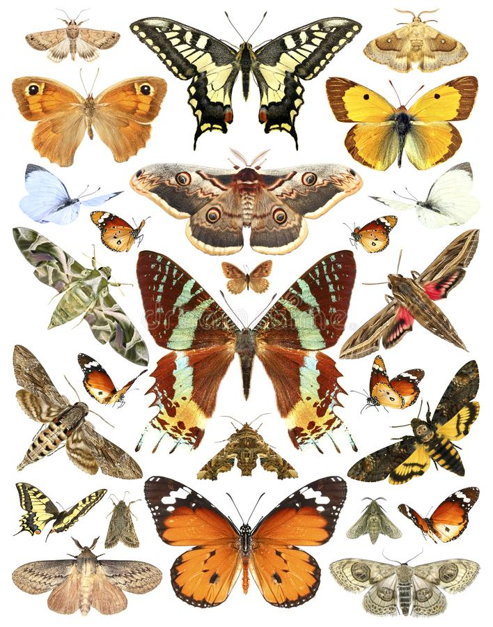 Butterflies and moths. Isolated on a white background royalty free stock photography