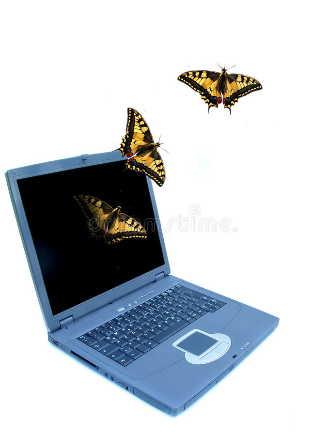 Butterflies and notebook royalty free stock image