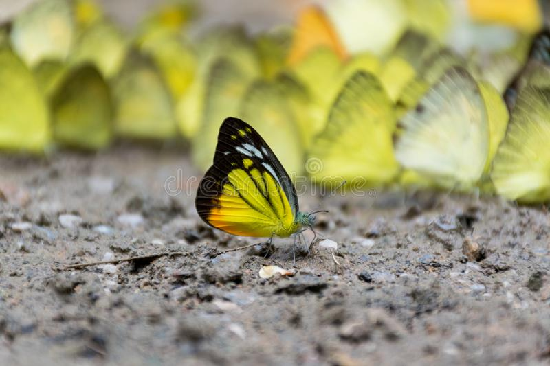 Butterflies outside the group stock photo