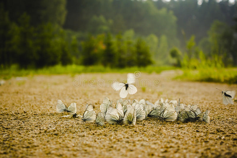 Download Butterflies party stock image. Image of bunch, sunlight - 20411071