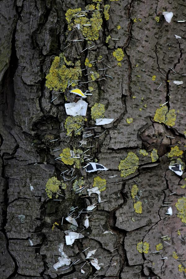 Butterflies or staples in the tree advertising by hand royalty free stock image