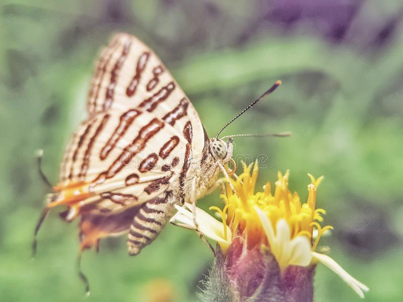 Butterflies that suck nectar from flowers in the morning. royalty free stock photos