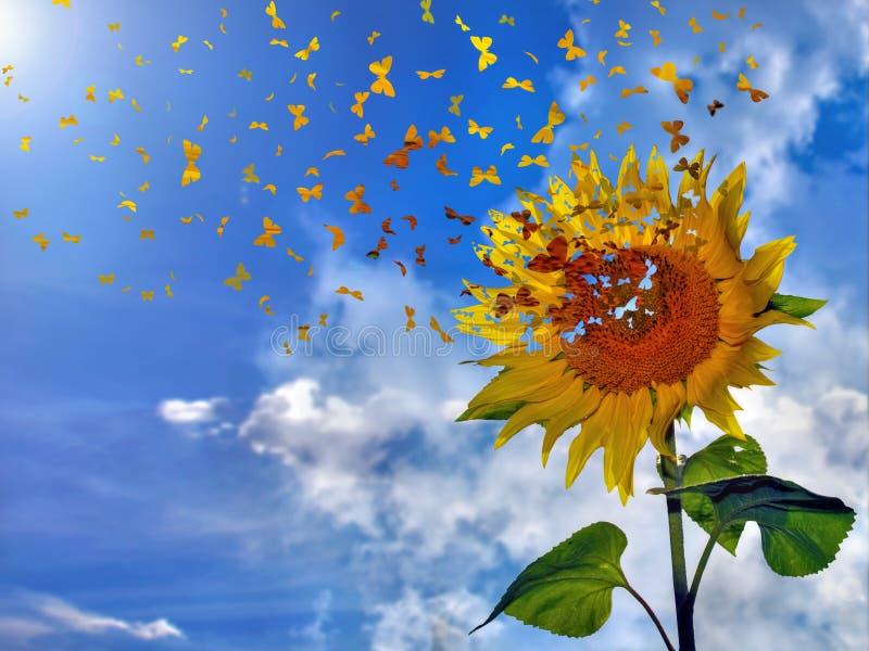 Butterflies on sunflower royalty free illustration