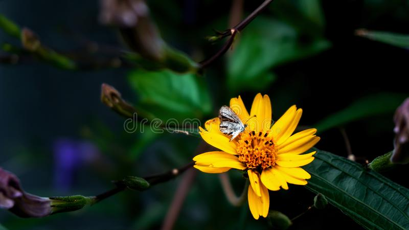Butterflies are taking a sweet drink from the flower royalty free stock images
