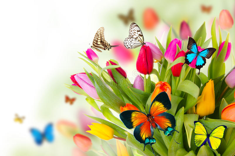 Butterflies on tulips stock photography