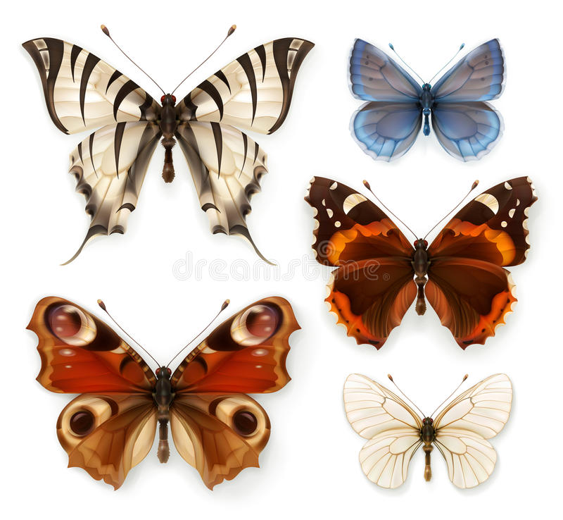 Butterflies vector icons vector illustration