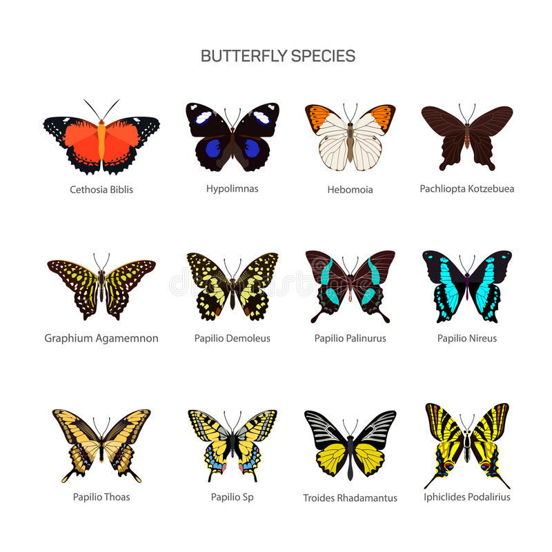 Butterflies vector set in flat style design. Different kind of butterfly species icons collection. royalty free illustration