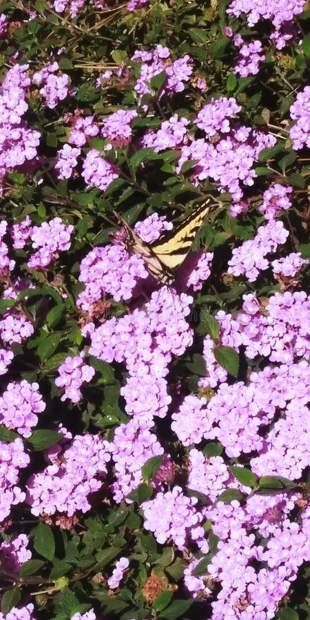 Butterflight immagine stock