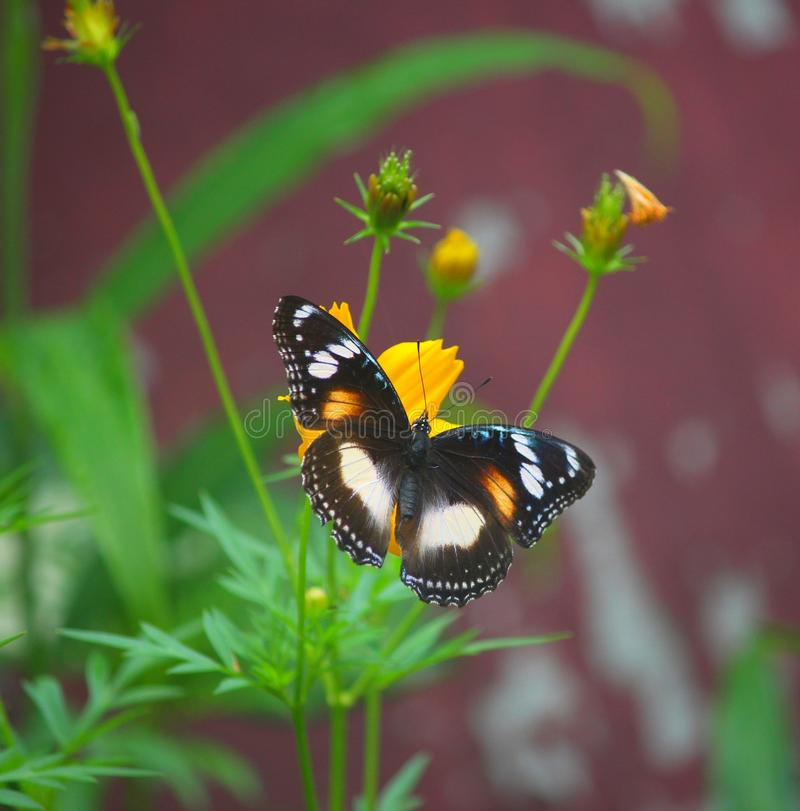 Butterflt стоковая фотография rf