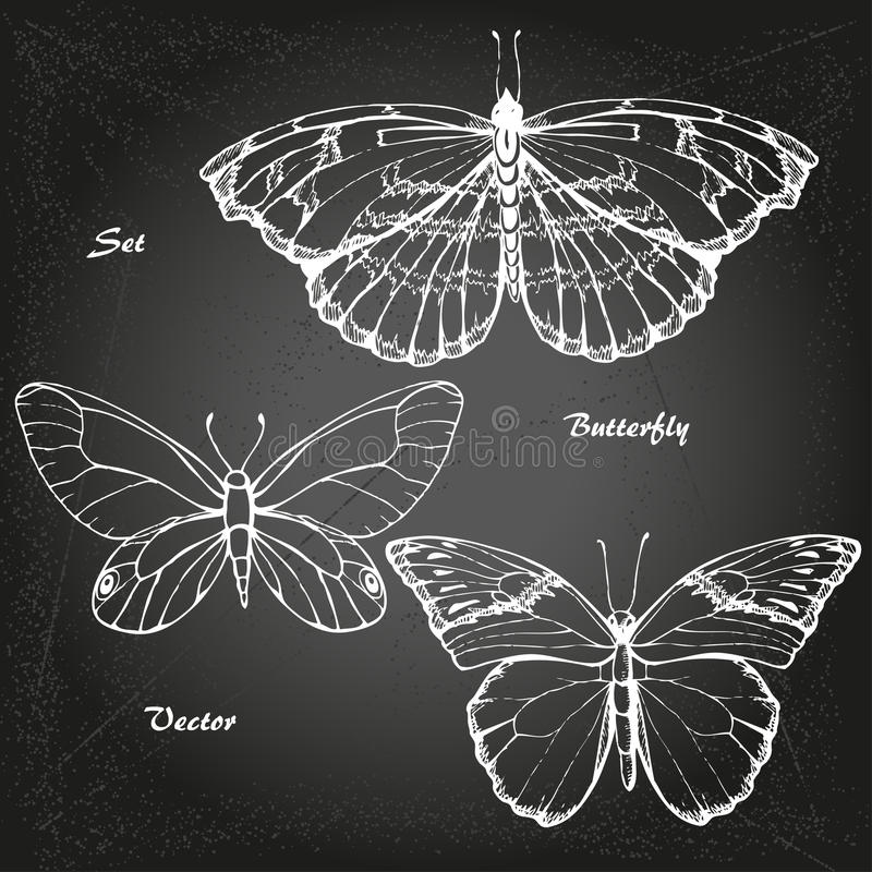 Free Butterfly 1 Royalty Free Stock Image - 60217816