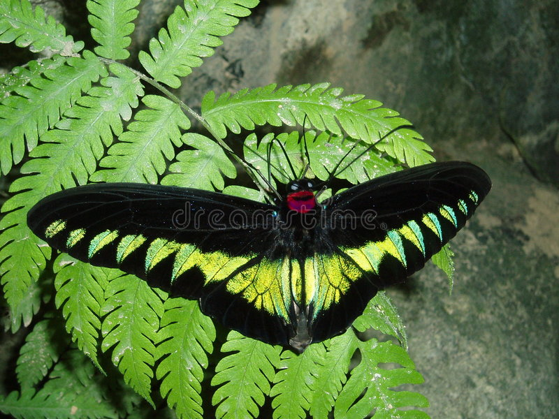 Download Butterfly stock photo. Image of garden, green, beautiful - 102764