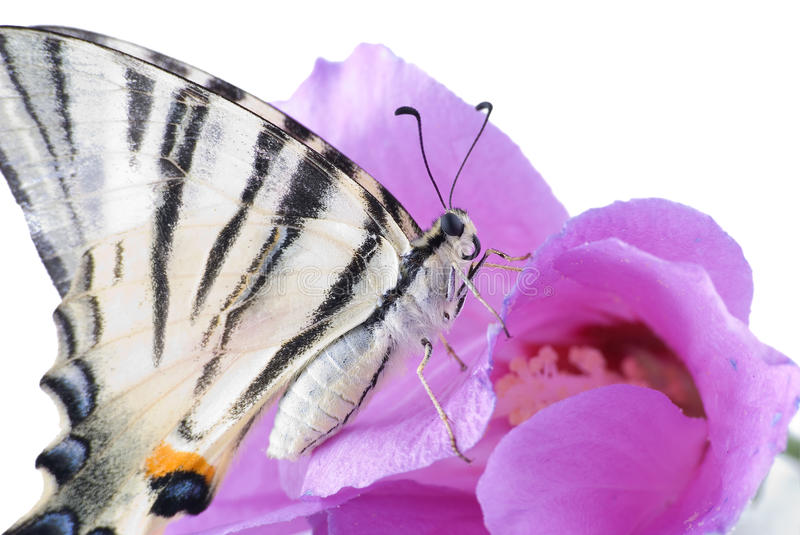 Download The butterfly stock image. Image of tarsus, animal, color - 10836147