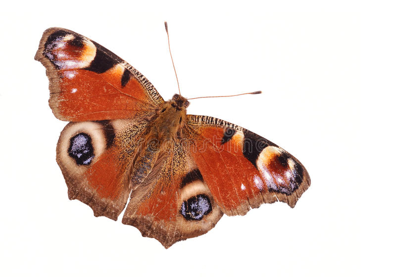 Download Butterfly Royalty Free Stock Photos - Image: 11865498