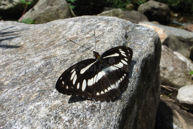 Download Butterfly Stock Images - Image: 12097324