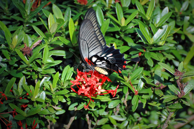 Download Butterfly stock image. Image of bright, life, flight - 12236635