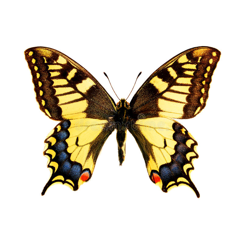 Download Butterfly stock photo. Image of insect, flat, decorative - 12359512