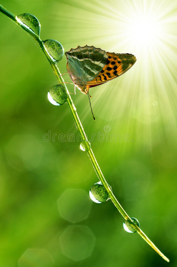 Download Butterfly stock image. Image of outdoors, drop, nature - 12502801
