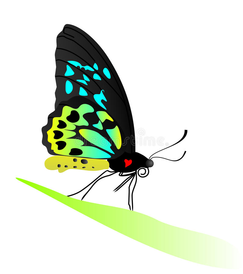 Download Butterfly Royalty Free Stock Image - Image: 12717476