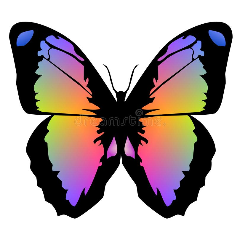 Butterfly 13 royalty free stock images