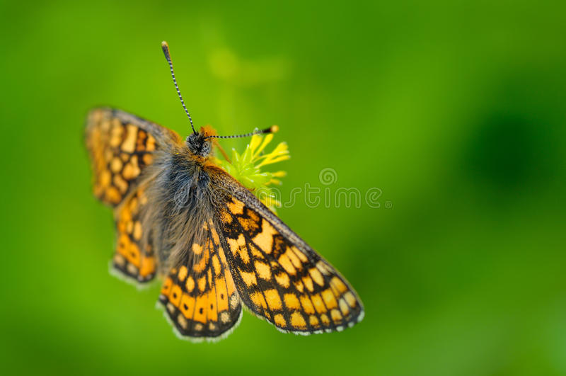 Download Butterfly stock photo. Image of insect, color, outside - 13147210