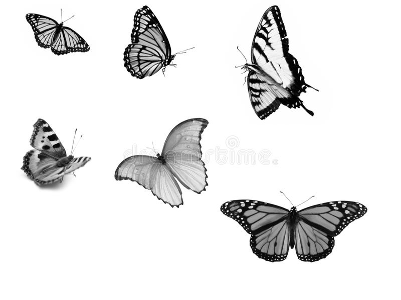 Butterfly. Image of six colored butterflies of white and black in flight vector illustration